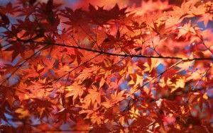 Herbst_1000