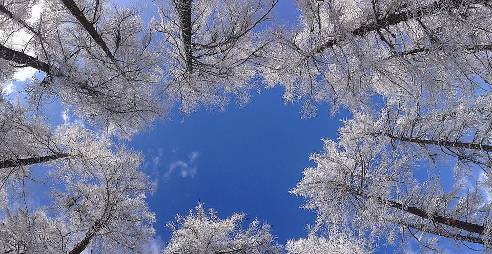 baume-winter